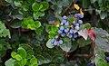 Крымские растения.jpg