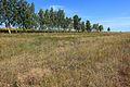 Лесопосадка - panoramio (6).jpg