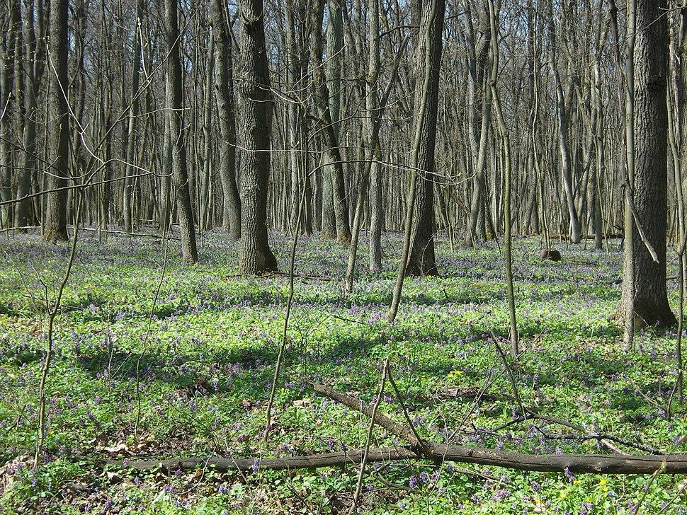 Лес на Ворскле 06
