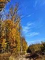 Лісова галявина поблизу Давидковець восени.jpg