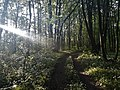 Лісова дорога у Козаковій Долині.jpg