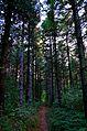 Миљаковачка шума.JPG