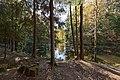 Осенняя Сергиевка. Юго-восточная часть Большого пруда. Вид на остров..jpg