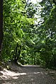 Парк Берёзовая роща в Киеве. Фото 37.jpg
