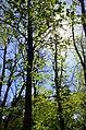 Парк Нивки, західна частина. Місто Київ. Фото 4.jpg