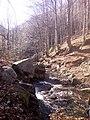 По пътя за хижа Хубавец, резерват Стара река... 25.jpg