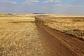 Степная дорога в восточном направлении. Видна гора Базарбай - panoramio.jpg