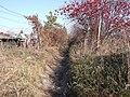 С.о. Рассвет тропа - panoramio.jpg