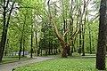 Трускавецький парк 10.jpg