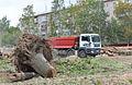 Уничтожение леса.jpg
