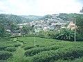บ้านวาวี มุมมองจากไร่ชาวาวี - panoramio.jpg
