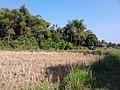 หมู่บ้าน นาพิพาน ต.ปะโค เมือง หนองคาย - panoramio (8).jpg