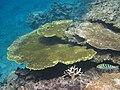 サンゴ2215.jpg