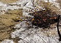 九寨溝 Jiuzhaigou - panoramio (2).jpg