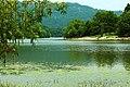嘉陵风光之苟溪河湿地 - panoramio (6).jpg