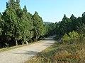 寿县八公山国家森林公园景色 - panoramio (24).jpg