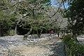 日本德島12.jpg