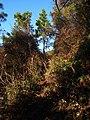 樟林登山道 - Zhanglin Mountain Trail - 2015.01 - panoramio (1).jpg