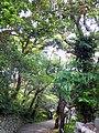潮岬神社に向かう道 - panoramio.jpg