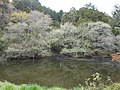 番ヶ森山 入口のため池 Pond in Mt. Bangamori - panoramio.jpg