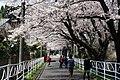 陶彩の道 - panoramio.jpg