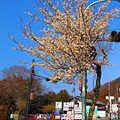 青梅街道-梅-02 - panoramio.jpg