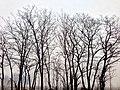 鳥巢 - panoramio (9).jpg