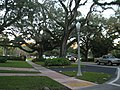 -TREES-CORAL GABLES - panoramio.jpg