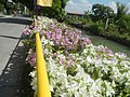 0032Views of Agnaya irrigation canals 34.jpg