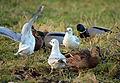 02014.12.Die Vögel im Winter am San.JPG