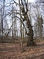 05-04-03-plagefenn-by-RalfR-43.jpg