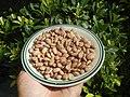 0682Pinto bean textures 14.jpg