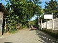 09409jfCattle goats grasslands Roads San Miguel, Bulacanfvf 37.jpg
