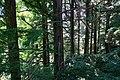 170811 Rokko Alpine Botanical Garden Kobe Japan30s3.jpg
