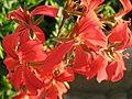1866 - Salzburg - Mirabellgarten - Flowers.JPG