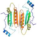1R9F tombusvirus p19 dimer.png