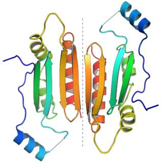 RNA silencing suppressor p19