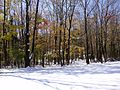 2011-10-30 02-Trees on Hewitt Road in West Amwell, Hunterdon County, New Jersey after 6 to 7 inches of snow fell the previous day during the 2011 Halloween nor'easter.jpg
