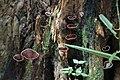 2014 Borneo Luyten-De-Hauwere-Forest-06.jpg