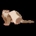 201502 ferret.png