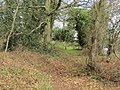 2018-04-16 Woodland walk near Felbrigg village, Cromer (1).JPG