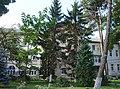 21-101-5006 Палісадник обласної лікарні.jpg