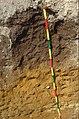 29-kerbernez-1991-nicolas-G.B2-sur-arene-saine-110cm.jpg