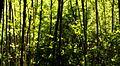 3b Forest texture (7518584308).jpg