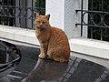 48 Skopje, day cat (33687629402).jpg