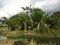 501Pandi Bulacan Municipal Roads Landmarks 22.jpg