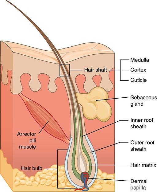 506 Hair