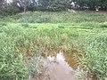 5832 Groen.Westpark.DeHeld.Leegkerk.202009 Brug Water Zwedenlaan Tarralaan Scounting VariaSki Hoogkerk Buitengebied.jpg