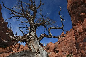 Fiery Furnace (Arches National Park) - Image: A288, Arches National Park, Fiery Furnace, 2008