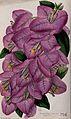 A bougainvillea plant (Bougainvillea speciosa); flowering st Wellcome V0044424.jpg
